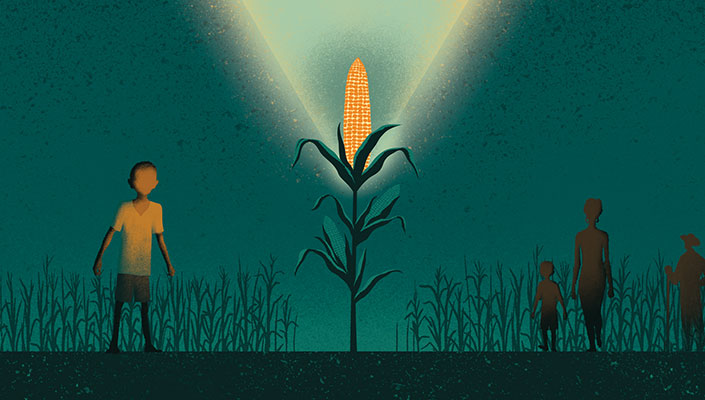 corn field illustration