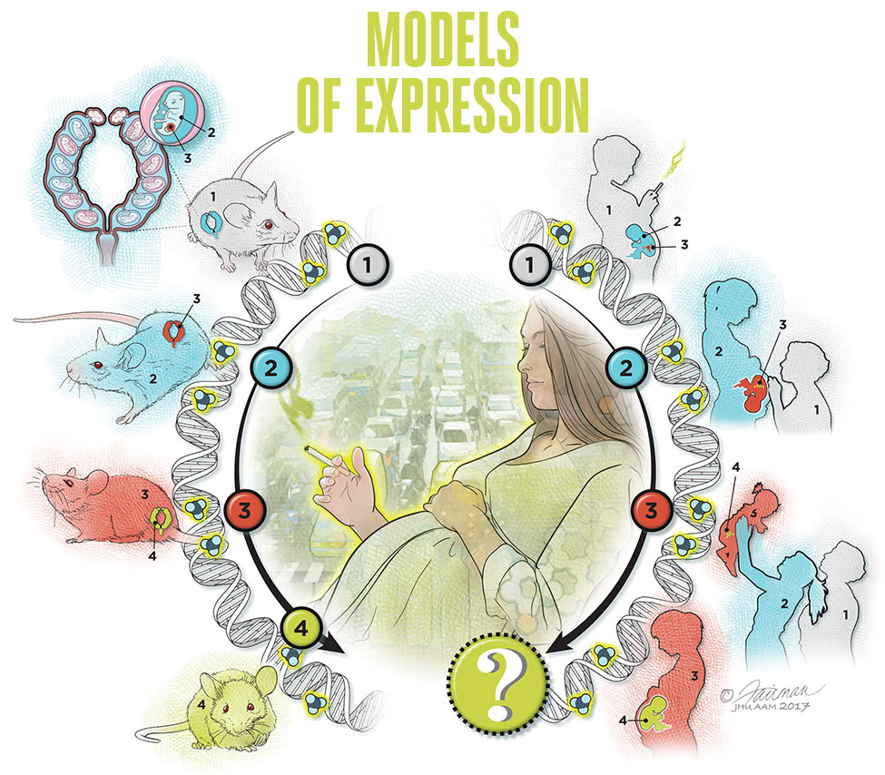MODELS  OF EXPRESSION ILLUSTRATION
